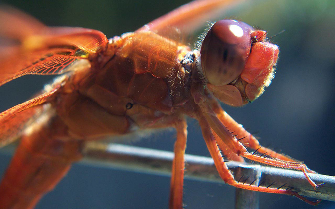 High-resolution desktop wallpaper Dragonfly by Andy Purviance