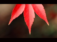 High-resolution desktop wallpaper Red Fire by David Stys