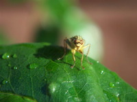 High-resolution desktop wallpaper Dung Fly by Andy Purviance