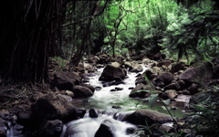 High-resolution desktop wallpaper Hawaiian Stream by Steven Miller