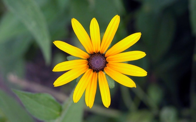 High-resolution desktop wallpaper Flower by chickenwire