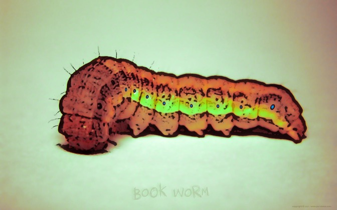 High-resolution desktop wallpaper Book Worm by Andy Purviance