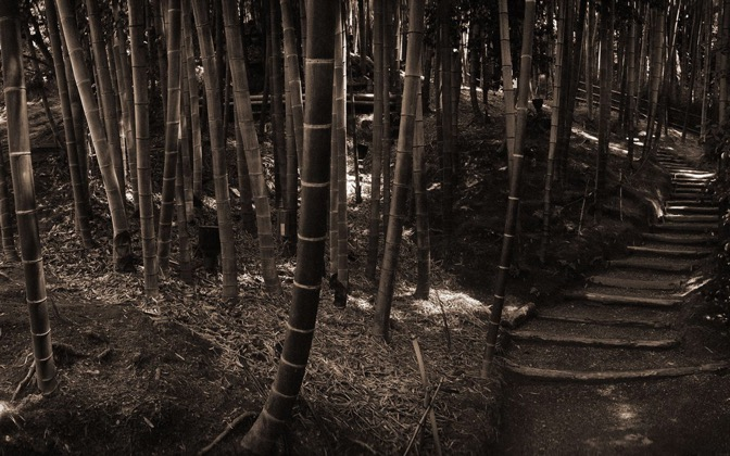 High-resolution desktop wallpaper Kyoto Bamboo by Steven Miller