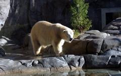 High-resolution desktop wallpaper Polar Bear by Tyroga
