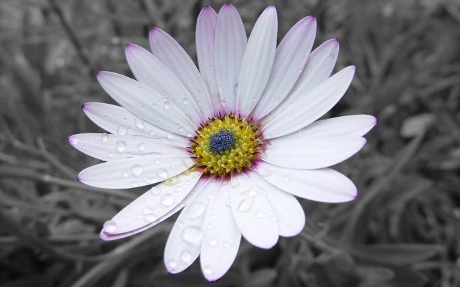 High-resolution desktop wallpaper Flower by Poiple Shadow