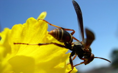 High-resolution desktop wallpaper Wasp & Daffodil by aaronc