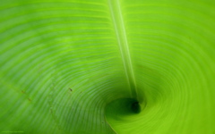 High-resolution desktop wallpaper Green Tube by Aurelien Le Roux