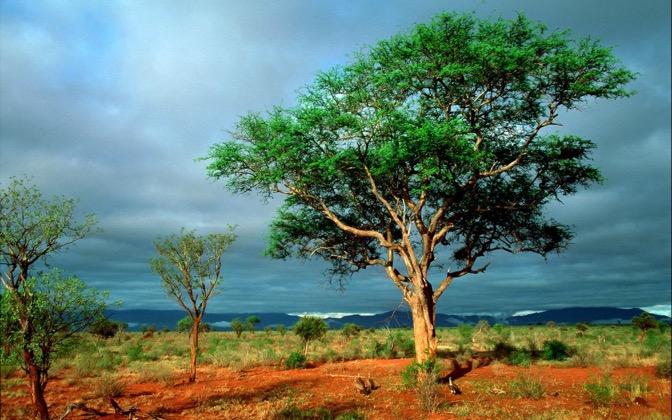 High-resolution desktop wallpaper African Landscape by Marcus Stenberg