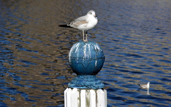 High-resolution desktop wallpaper Seagull by chickenwire