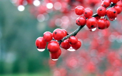 High-resolution desktop wallpaper Ickleberries by David Stys