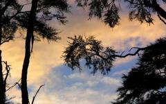High-resolution desktop wallpaper Bark Bay Sunset by Pond