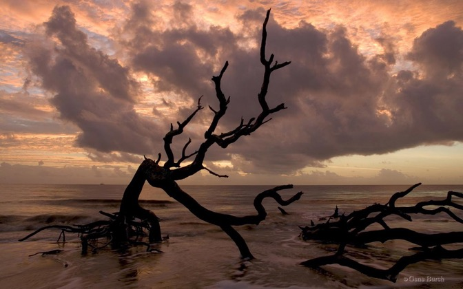 High-resolution desktop wallpaper Driftwood Beach by Gene Burch