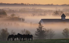 High-resolution desktop wallpaper Foggy Horse Farm by Gene Burch