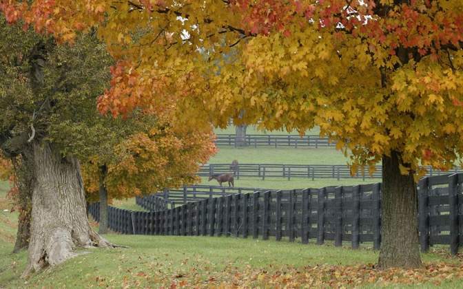 High-resolution desktop wallpaper Horse Farm in Fall by Gene Burch