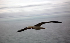 High-resolution desktop wallpaper A Gull In Flight by dreamful