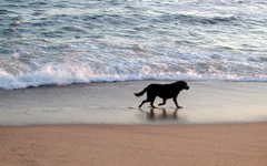 High-resolution desktop wallpaper Nantucket Dog by brusty