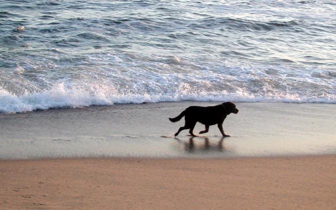 High-resolution desktop wallpaper Nantucket Dog by brusty