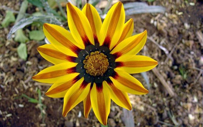 High-resolution desktop wallpaper Flower from Tabuk by KURD