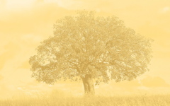 High-resolution desktop wallpaper Arbre by lagroue