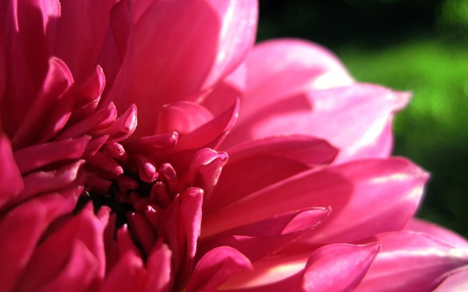 High-resolution desktop wallpaper Gallery Dahlia by Geoff Puryear
