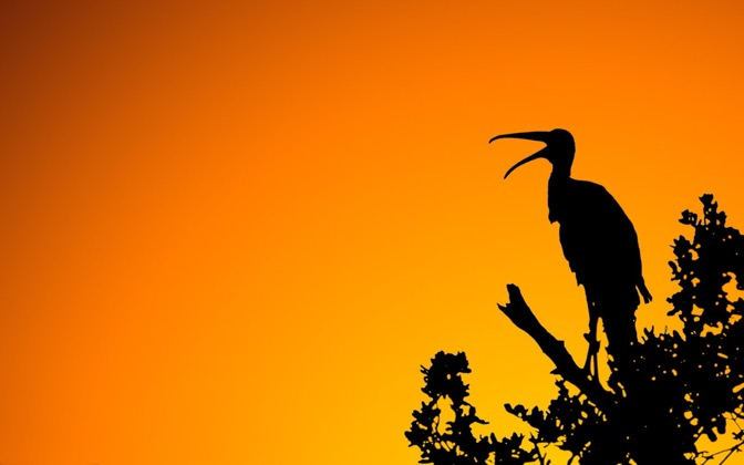 High-resolution desktop wallpaper Woodstork Sunset by TheFozz
