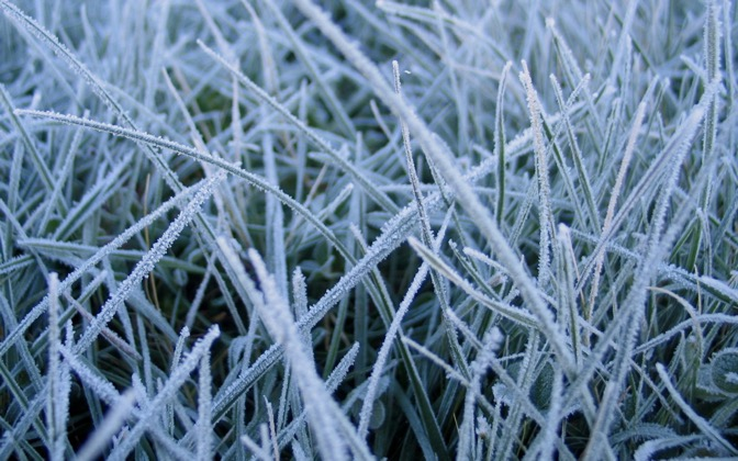 High-resolution desktop wallpaper Frosted Grass by Dave Joyce