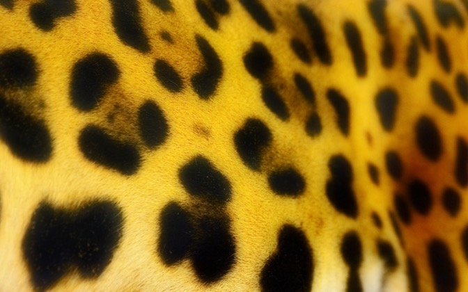 High-resolution desktop wallpaper Jaguar's Spots by TheFozz