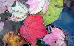 High-resolution desktop wallpaper Autumn Leaves by bu11frogg