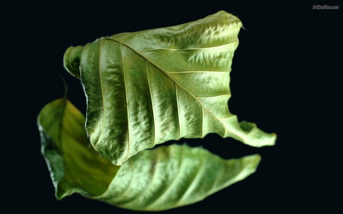 High-resolution desktop wallpaper Green Leaf by Daffou