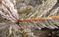 High-resolution desktop wallpaper Snowy Pine by Neil Beaty