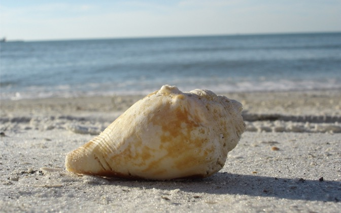 High-resolution desktop wallpaper A Clear Water Beach Shell by ShamirKanji