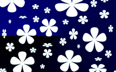 High-resolution desktop wallpaper White Flowers by Lathe