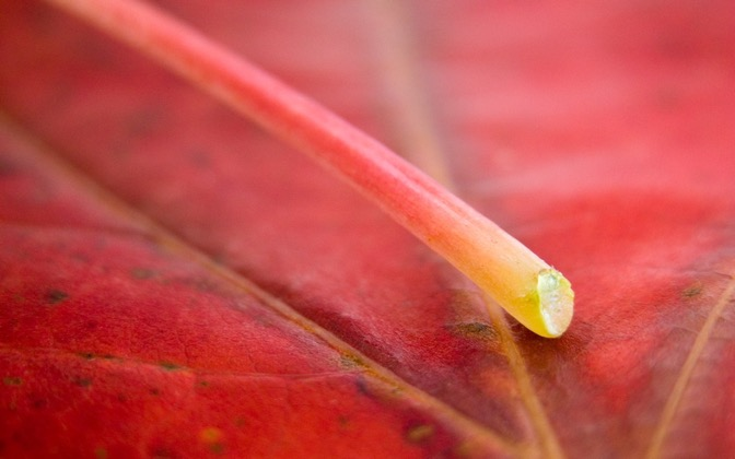 High-resolution desktop wallpaper Leaf 06 by Mike Swanson