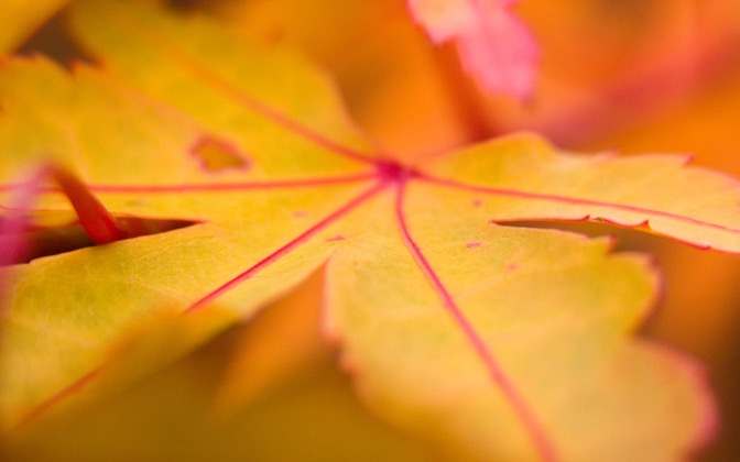 High-resolution desktop wallpaper Leaf 23 by Mike Swanson