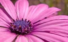 High-resolution desktop wallpaper Flower 14 by Mike Swanson