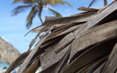 High-resolution desktop wallpaper Tropical Leaf by Jos Bouthoorn