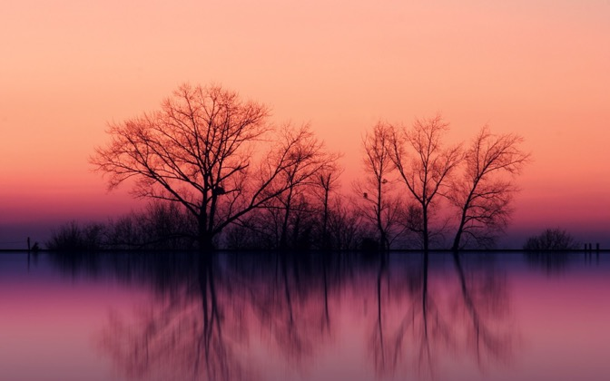 High-resolution desktop wallpaper Trees at Dusk by TTombo
