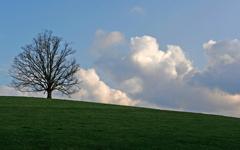 High-resolution desktop wallpaper One Tree Hill by matt mosher