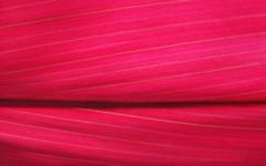 High-resolution desktop wallpaper Red Leaf by dimage