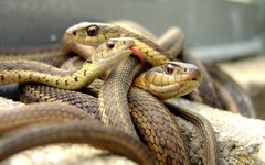 High-resolution desktop wallpaper Why Did it Have to Be Snakes? by Neil Beaty