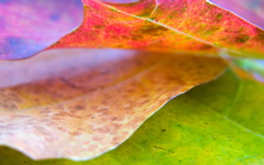 High-resolution desktop wallpaper Leaf 8 by Mike Swanson