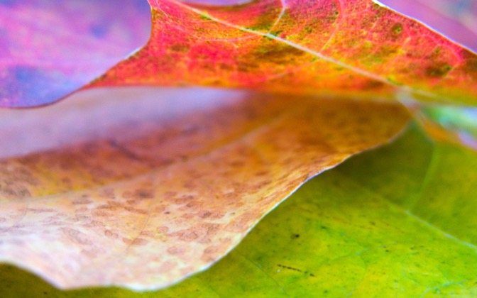 High-resolution desktop wallpaper Leaf 8 by Mike Swanson