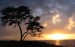 High-resolution desktop wallpaper Tree at Wailea by Fahrvergnugen