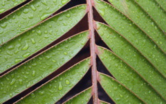 High-resolution desktop wallpaper Wet Leaf by girlracer