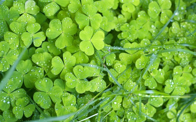 High-resolution desktop wallpaper Irish Clovers by Blake J. Nolan
