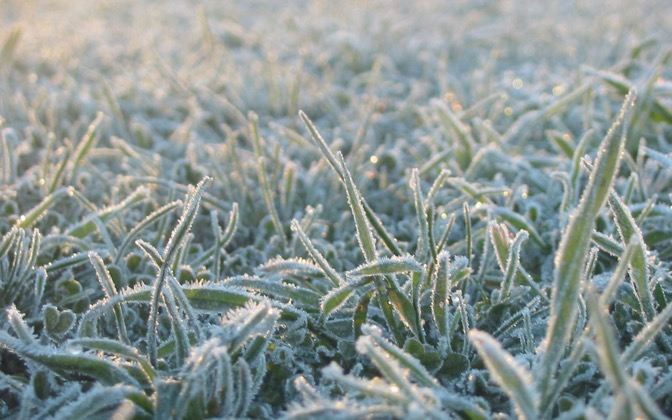 High-resolution desktop wallpaper Frosty Grass by GimliNZ