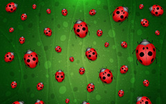 High-resolution desktop wallpaper All is Full of Ladybugs by vladstudio