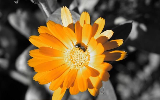 High-resolution desktop wallpaper Golden Flower by Laurinio