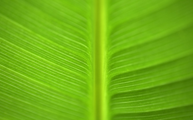 High-resolution desktop wallpaper Green Goodness by matt mosher