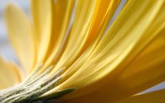High-resolution desktop wallpaper Flower 15 by Mike Swanson